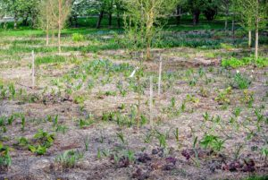 Planting a perennial bed can be fun when done properly. Before starting, be sure to measure the bed area, and know the amount of sunlight the area gets and how well the soil drains in the beds. When mature - this bed will look so gorgeous.