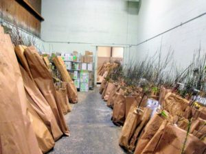 Although Fedco does not have a retail shop, it does host a large annual sale at its warehouses, where visitors can purchase and pick up various specimens. (Courtesy of Fedco Trees)
