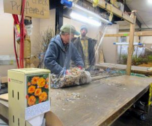 Once orders are made, the seedlings are carefully packed to keep in the moisture during shipping. (Courtesy of Fedco Trees)