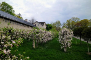 I planted this espalier of apple trees when I first moved to Bedford - I knew right away it was the perfect location. Espalier refers to an ancient technique, that trains trees to grow flat, either against a wall, or along a wire-strung framework.