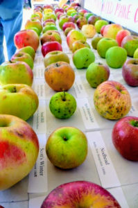 Fedco grows a large variety of fruit trees. This is a sampling of the kinds of apple trees they provide. (Courtesy of Fedco Trees)