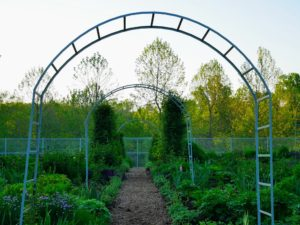 In my flower garden are several tall, round arbors that will soon be covered with flowering morning glory vines. This garden is looking so wonderful this season.
