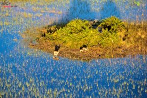 We also enjoyed great views of the flooded Okavango Delta from the air. Here is a small group of red lechwe, another type of antelope found in the wetlands of south central Africa. Truman loved the helicopter ride.