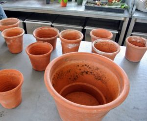 I like to use terra cotta and clay pots because they allow proper aeration and moisture to penetrate through the sides and to the plant.