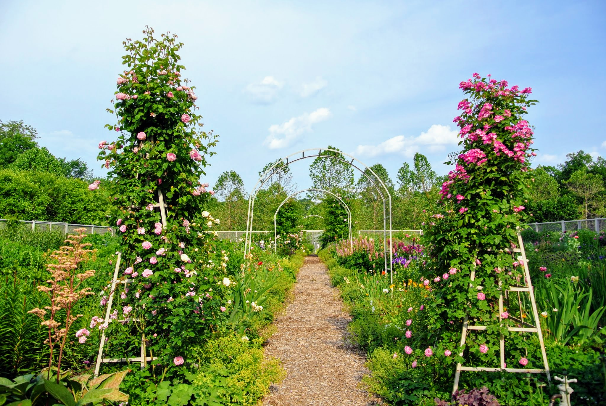 The Martha Stewart Blog Blog Archive Two Garden Tours At My Farm