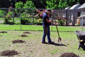 To make the rows look tidy, Wilmer uses his feet to measure equal amounts of space between all the mounds. Each mound should be at least six to eight feet from the next on all sides.