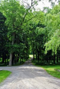 Every group touring the farm loves the winding road into the woodlands. During this time of year, it is shaded by a lovely canopy of foliage.