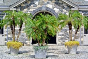 During the warmer months, I love to display tropical plants around the farm. These palms look so pretty in the stable courtyard.