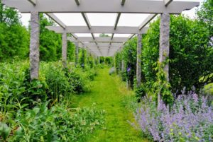 All the guests love my meandering clematis pergola.