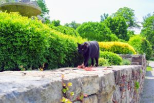 Here's Blackie coming by to get some attention from the guests. These are the gardens right outside my Winter House on my terrace parterre, where I also plant herbs, so they are easily accessible from my kitchen.