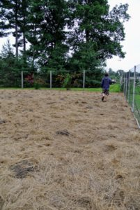 Ryan starts placing packets on the mounds of soil. Hay mulch enhances the look of the garden, avoids muddiness in the paths, keeps the pumpkins off the earth, and most importantly, enriches the soil.