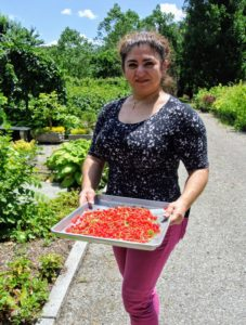 Here is my housekeeper, Enma, with a full tray of juicy red currants. I like to place them in single layers, on trays, so they don't get crushed. After each batch of currants is picked, my housekeepers gently take each fruit off its long-stem.