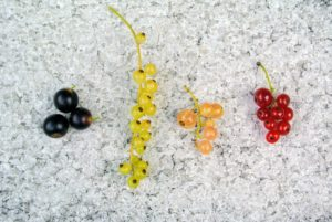 I grow black, white, and red currants.