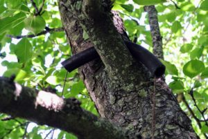 Here is the rubber hose on the branch.