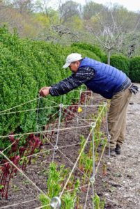 In April, Chhewang put up stakes, so the peonies would be well-supported as they grow.