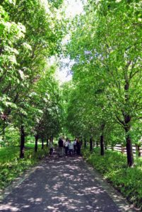 This next group from ArtsWestchester came in the afternoon. Ryan started this tour from the other side of the farm, so they walked under the cool canopy of linden trees first.