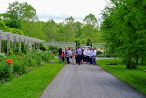 The group passed the long and winding clematis pergola on the way to my Winter House terrace parterre for refreshments.