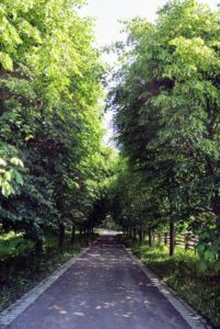 The guests took another stroll through the allee of lindens back to their cars.
