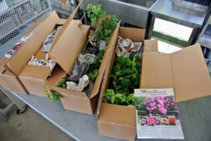 Recently, we received three boxes filled with 25 beautiful, healthy rose plants from Northland Rosarium. https://www.northlandrosarium.com