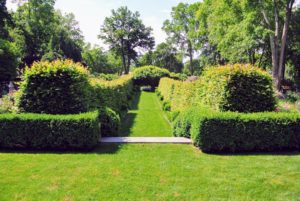 This hornbeam hedge allee is new to me - I love it. It is a nice addition to the garden.