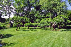 Here is the orchard, located beyond the garden and pool on the way to the barn.