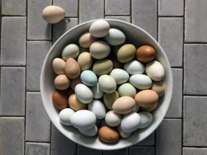 We also had eggs - fresh from my chickens at the farm. (Photo by Douglas Friedman)