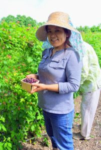 Sanu is excited about this year's crop. She's dropping the picked berries into a berry box. It's okay to fill the container, but she's careful not to pack them in or press them down. All the picked fruits are kept in the shade until they go into the fridge.