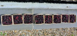 To save berries for use at another time, freeze them - lay them out onto flat trays in single layers and freeze until solid. Once they are frozen, they can be moved into plastic containers or freezer bags until ready to eat.