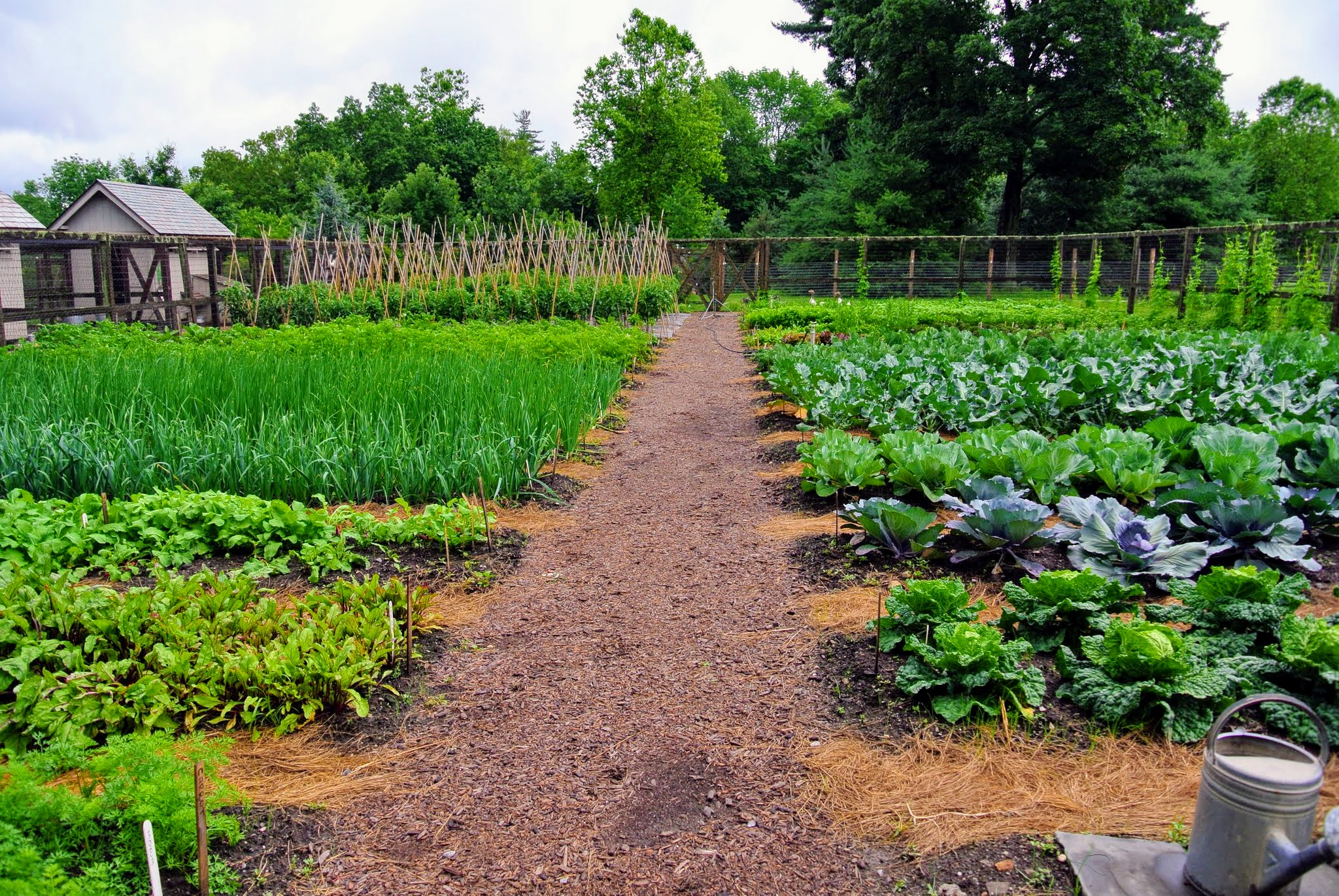 The Martha Stewart Blog Blog Archive The Vegetable Garden And