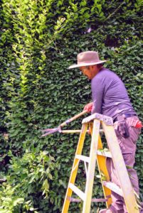 Using hand shears is definitely more time consuming than using a gas powered tool, but it is also more exact, and that's important when sculpting formal hedges.