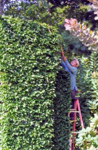 Here is Chhewang pruning the last section.