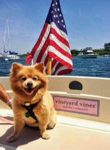 "Here is Samantha's German Spitz, ""Baby"", enjoying the ride on the boat."