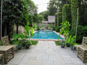 Every summer, I send a collection of tropical plants from my Bedford farm to my home in East Hampton and to Skylands, my home in Maine. These alocasias look great around the pool.