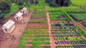 After two weeks in Maine, I was eager to visit my gardens back at my Bedford farm. Here is a drone's view of my vegetable garden. The chicken coops are on the left, and my pumpkin patch is in the back.