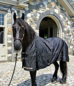 Meindert is walked outside to model his new turnout sheet. He looks great in it - plus it is all black, which is even better.