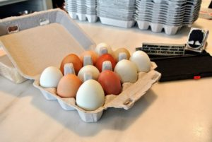 An assortment of different pastel colored fresh eggs, straight from the coops.