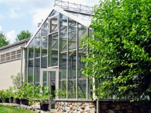 The entire greenhouse looks like new. All winter long, cold hardy crops, such as lettuce greens, root vegetables, bunching onions, and brassicas can be successfully grown and harvested here.