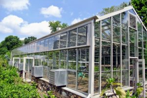 After about 10-days, look how wonderful the vegetable greenhouse windows are.