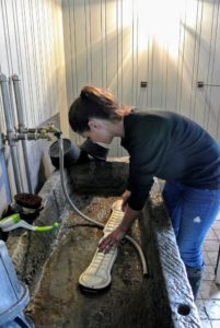 She also washes the roper cinches and girths. These are used around the belly of the horse to keep the saddle in place.