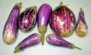 And here are several eggplants. I like to pick them when they're smaller, when they are young and tender.
