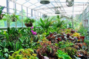 Inside, I keep lots of potted rare and unusual plants that need lots of light and heat in order to grow.