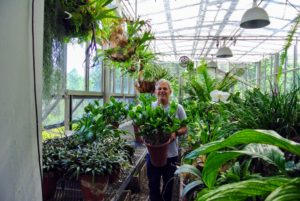 The first step is to move all the plants from the long sliding tables on each side. Here is Fernando carrying some of the potted specimens out of this area.