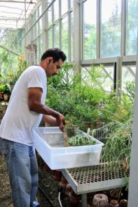Carlos uses a flat bin to remove some of the smaller, more delicate specimens.