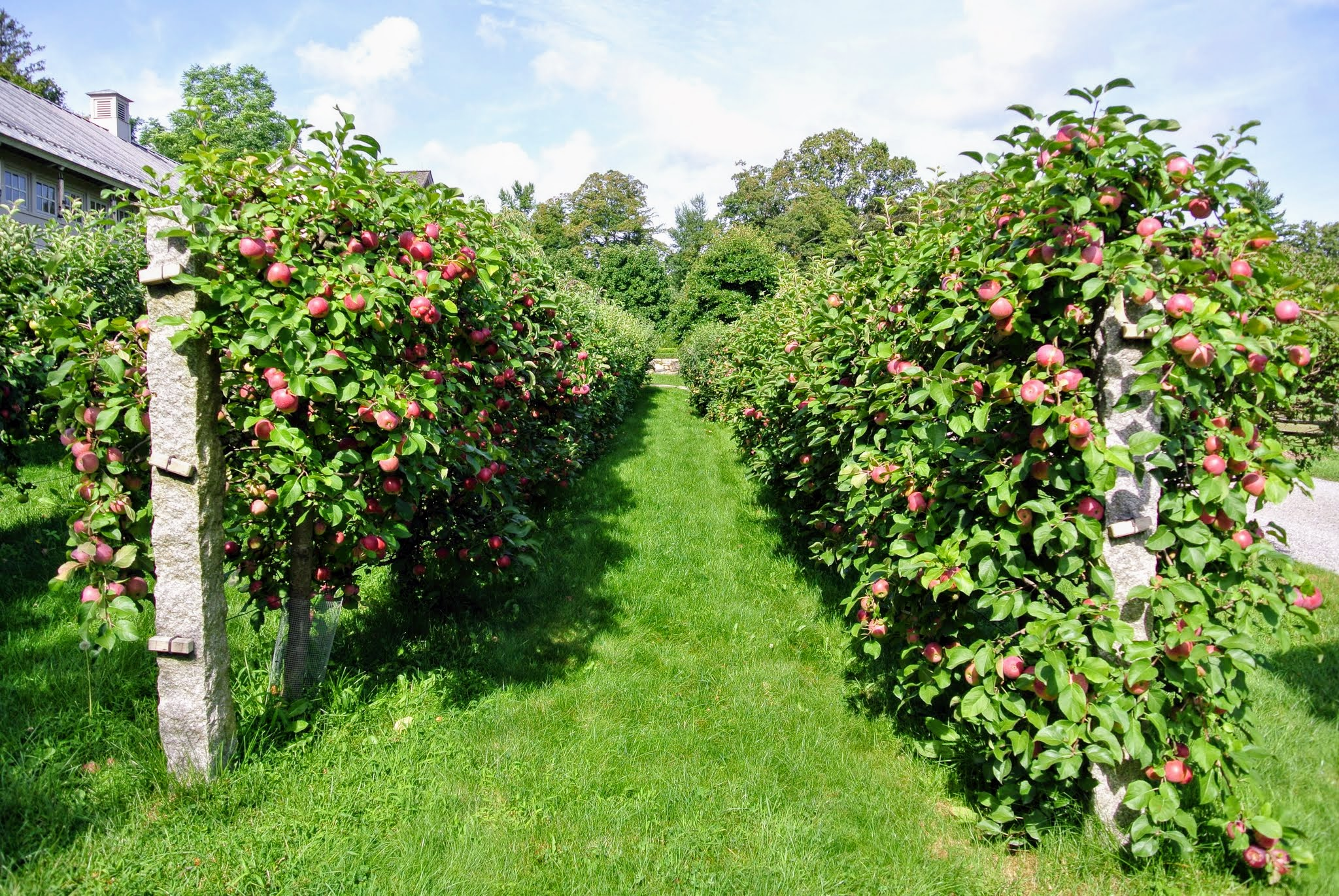 The Martha Stewart Blog Blog Archive The Many Apple Trees At