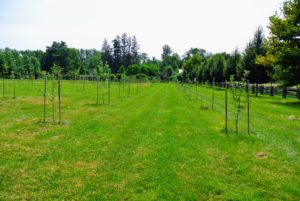 I can't wait until this fruit tree orchard is mature and full of apples, pears, plums, cherries, apricots, and so many more.