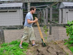 Ryan gently turns the soil with the broadfork. It's important to dig them up carefully, so as not to puncture any of the tubers.