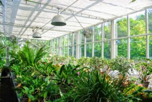 After a couple weeks, the greenhouse looks like new. Next - the outside - there is always lots to do at Cantitoe Corners.