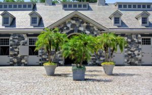 During this time of year, I always display many of my beautiful tropical plants around the farm. This is the courtyard in front of my stable, which we decorated with a cluster of palms.