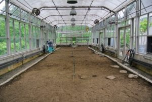 This is my vegetable greenhouse just before the cleaning process began. It is located near my Equipment Barn, and next to my Hay Barn and Citrus Hoop House. Inside, the entire bed was cleared and all the citrus plants were removed.
