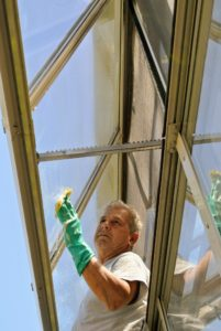 The uppermost windows on this greenhouse automatically open when temperatures inside are too high. Here, Fernando cleans the inside of these windows.